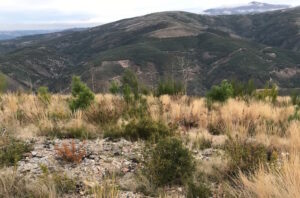 Active projects - Reforestation of the commonlands
