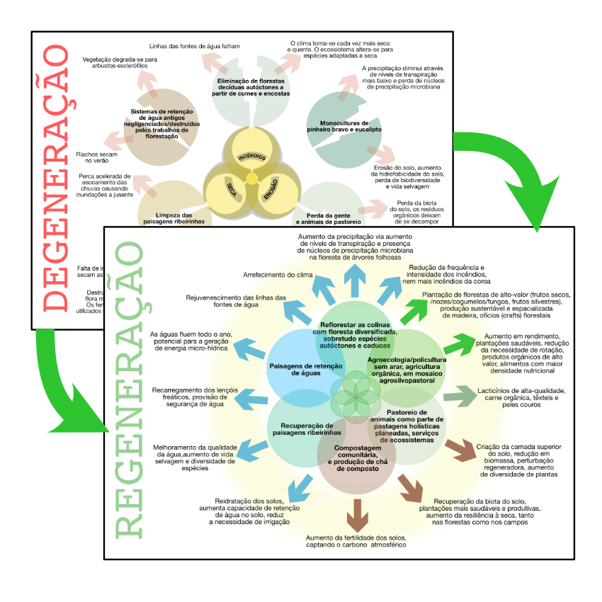 O proceso de regeneração ambiental